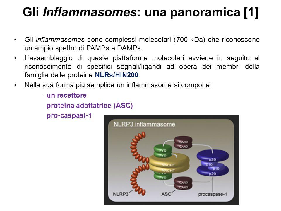 Gli Inflammasomes: una panoramica [1]